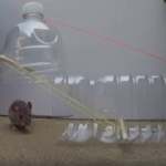ほぼ無料で誰でもできるネズミを駆除する手作り罠5選