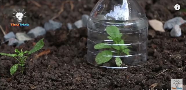 植物の苗を鳥や害虫から守るプロテクター